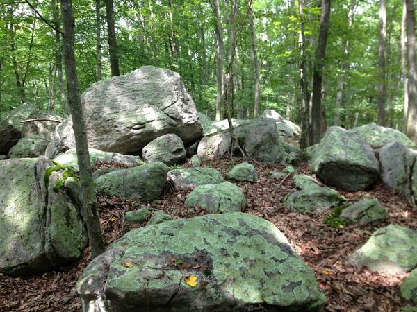 Ledyard is filled boulder moraines especially within the Pine Swamp Wildlife Corridor.