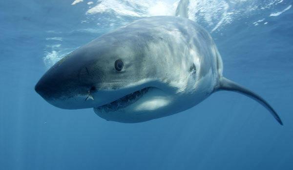 "You want sharks? Discovery's ""Shark Week"" has 'em."