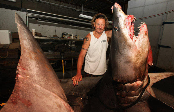 Kent Williams, owner of New Fishall Bait, stands next to a 1323.5 pound Mako shark at the company's headquarters in Gardena in June. Three friends caught the animal off the coast of Huntington Beach.