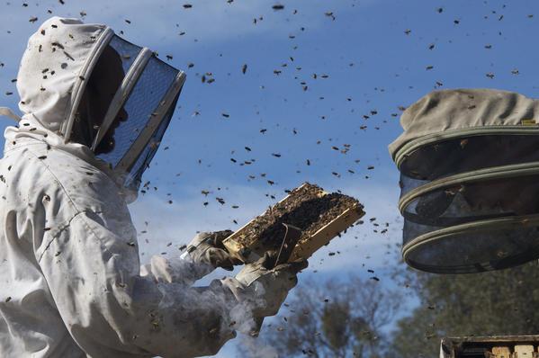 "In ""More Than Honey,"" we meet an eclectic array of beekeepers and scientists, each with his own distinctive approach to handling the little fellas."