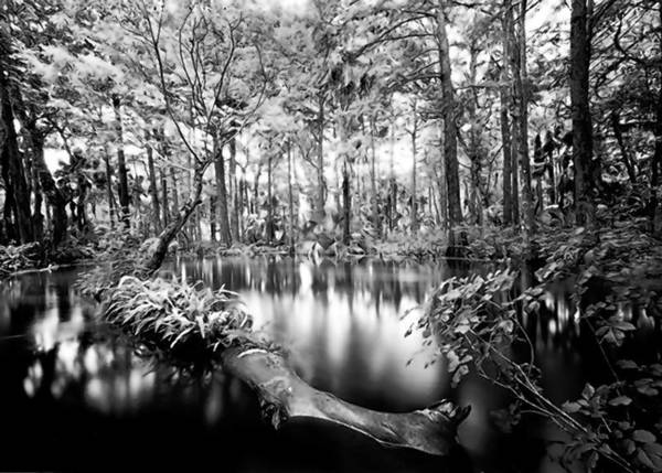 "See Clyde Butcher's ""Loxahatchee River 1"" at the Foosaner Art Museum in Melbourne."