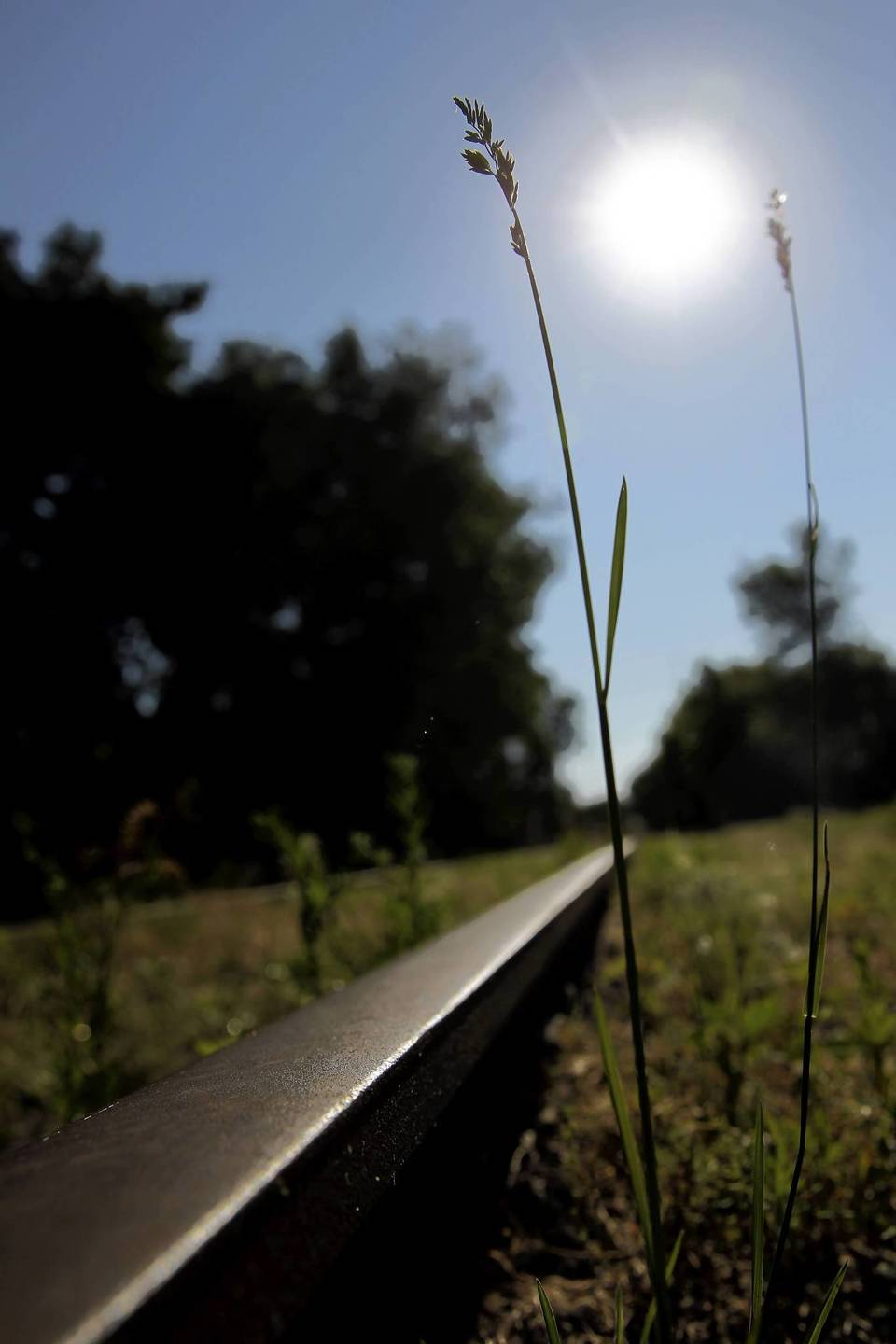 Grass and weeds populate the elevated Bloomingdale Trail near Chicago's Bucktown neighborhood.