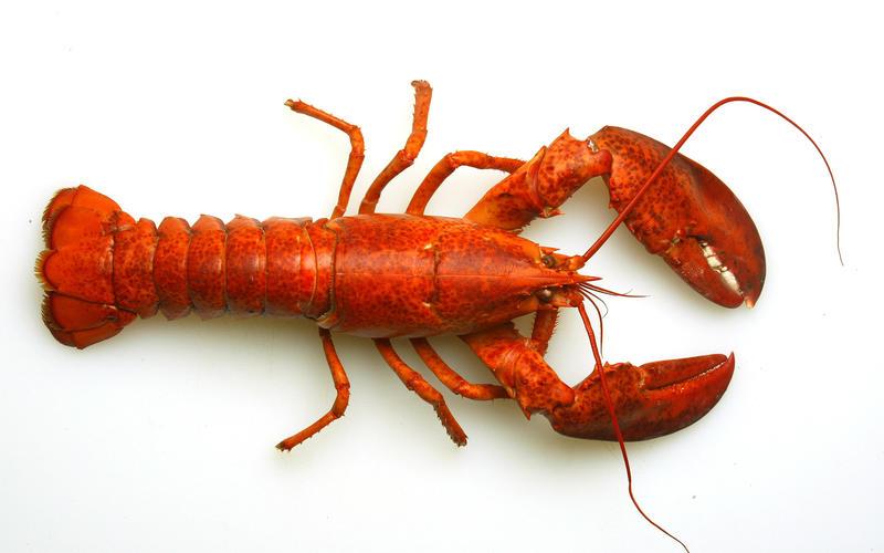 Ginger lime lobster salad