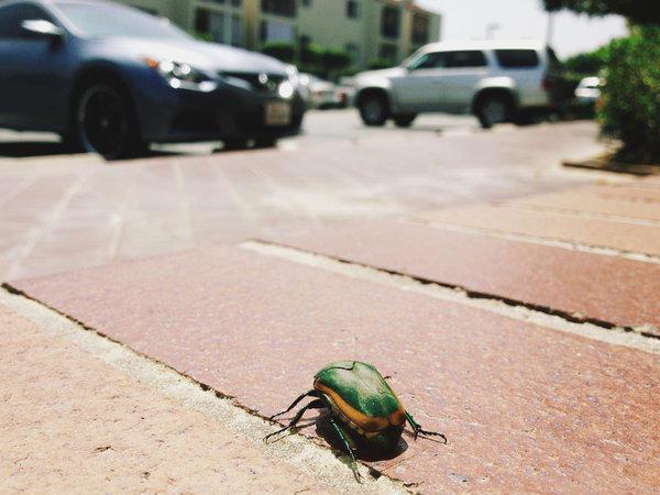 Beetle in San Gabriel