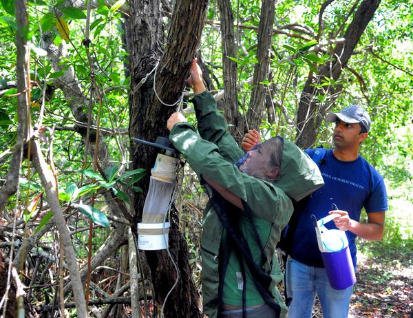 Yale University students Chelsea Lea Savit, at left, and Siddartha Blhandary put up a mosquito trap to collect mosquito specimens along the Snake Bight Trail in Everglades National Park. Photo by Taimy Alvarez, Sun Sentinel