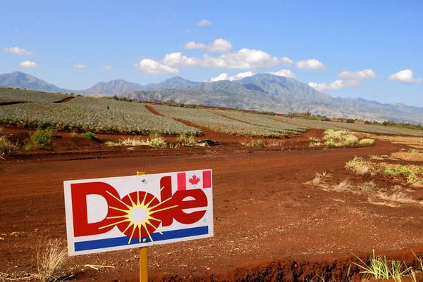 Dole Food Co. was founded in 1851 in Hawaii, a location that allowed it popularize pineapples in the U.S. Above, a Dole pineapple field near Wahiawa, Hawaii.