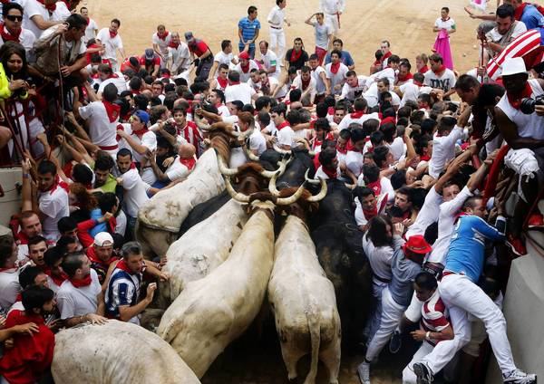 Runners get trapped with Fuente Ymbro fighting bulls and steer in a stampede at the entrance to the bull ring during the seventh running of the bulls of the San Fermin festival in Pamplona on July 13, 2013.