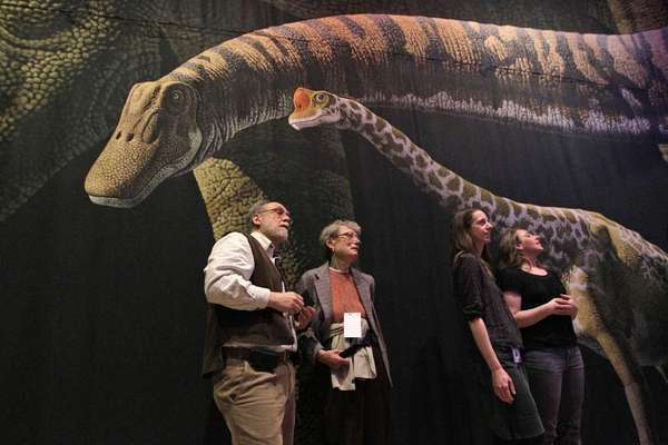 Visitors at the American Museum of Natural History in New York City look at models of the sauropod Mamenchisaurus. Researchers debate whether modern depictions of how sauropods held their long necks are accurate or not.