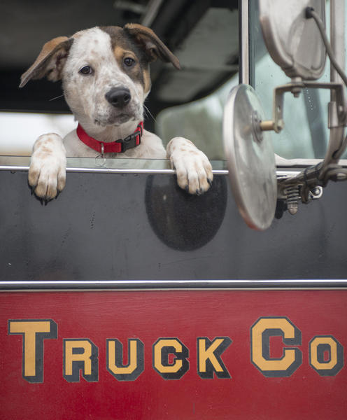 """Pouch appeared in Season 1 of NBC's """"Chicago Fire."""""""