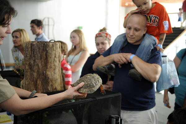 A wood turtle was one of several animals available for visitors at the Maryland Science Center's 8th Backyard Science Day.