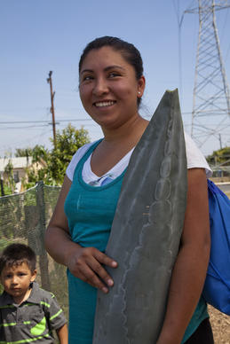 Norma Garcia receives a long blue agave leave from a gardener at the Stanford Avalon community garden in Los Angeles.
