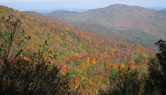 A pallette of reds, yellows and oranges had begun to show on the drive up Roan Mountain in northeast Tennessee.