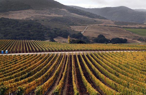 Sea Smoke vineyards, nestled in the Santa Rita Hills near Lompoc, California.