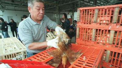 Ducks played key role in China's H7N9 flu outbreak, scientists say