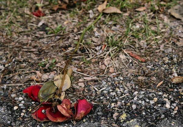 A flower was placed outside the Pi Kappa Alpha fraternity house at Northern Illinois University in DeKalb in December.