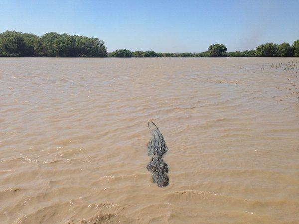 A saltwater crocodile swims in the Adelaide River near Darwin, Australia.