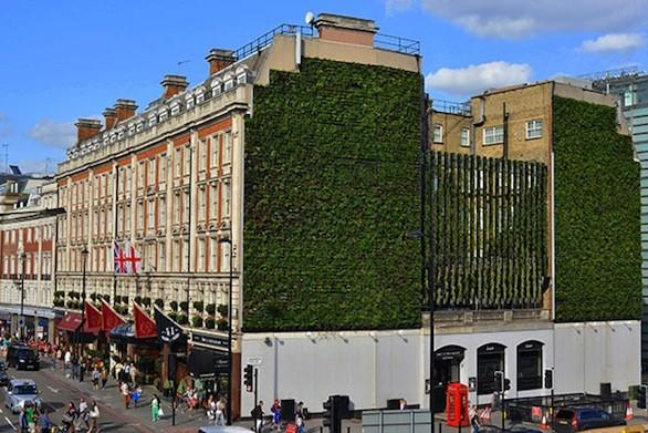 London's newest green landmark has been planted on the walls of two hotels near Buckingham Palace.