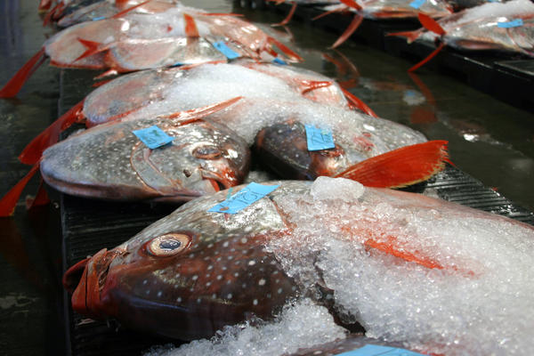 Opah, also called moonfish, were one of nine fish species analyzed in a new study that looked at how mercury gets into open-ocean fish and why the levels vary with depth.