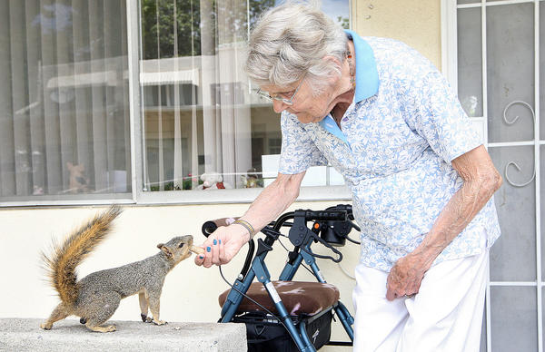 Norma Bowman, one of the residents at Twelve Oaks in La Crescenta who is forced to leave, feeds one of the local squirrels on Tuesday, Aug. 27, 2013.