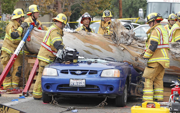 Firefighters work to remove a giant eucalyptus tree that crushed a car at a traffic light, killing 29-year-old Haeyoon Miller.