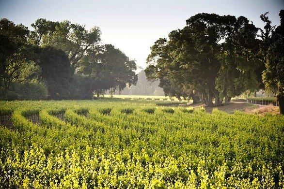 "Lodi, Calif., offers a ""passport"" good for the month of September to wine tastings and more during California Wine Month."