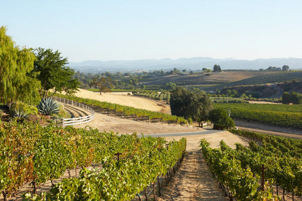 The Paso Robles wine country, which Blue Dolphin Inn guests can tour under a special package.