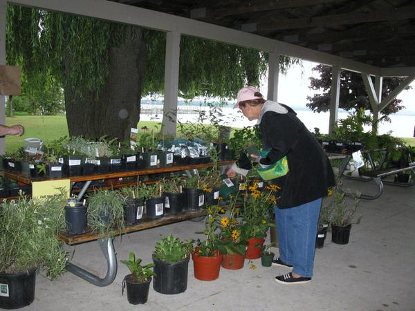 A member of the Charlevoix Evening Garden Club organizes plants at the club's 2012 sale. This year's plant sale will take place Saturday, Aug. 31.