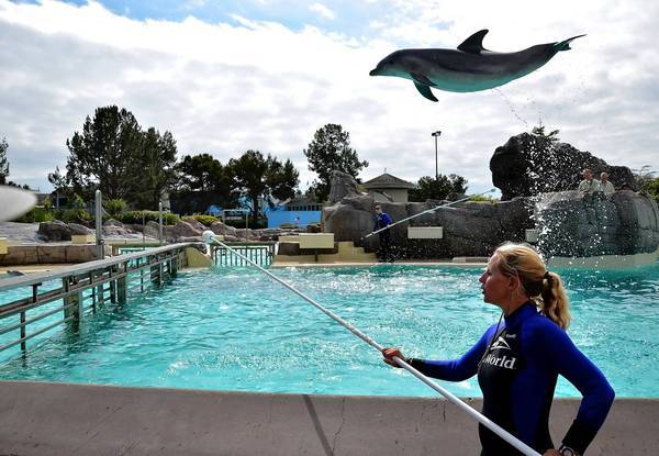 SeaWorld Entertainment reported overall revenue for the first six months of the year grew 2% but the company reported a net loss of $56.2 million, or 66 cents a share, for the period. Above, a dolphin soars at SeaWorld San Diego.