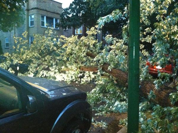 Photo of a down tree on the 4200 block of N. Whipple St in Chicago (Albany Park) after the squal line came through Friday night.
