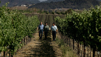 Water and the Central Coast's wine problem