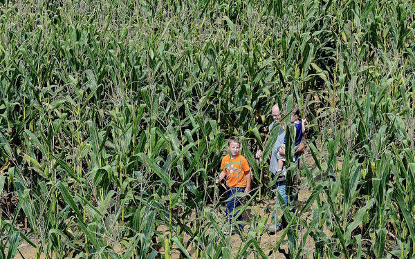 Sean Ashley, left, and Joseph Harne carrying his son Lakin make their way through the Hagerstown Corn Maze on Garden View Road west of Hagerstown.
