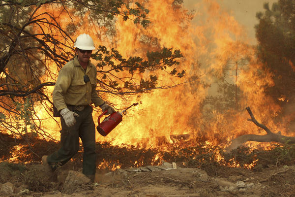 A member of the BLM Silver State Hotshot crew uses a drip torch to set back fires on the southern flank of the Rim Fire in California.