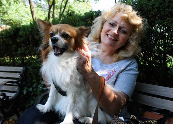 Ann Marie Schrage-Glaviano of Naperville holds her papillon, Dandy, which she adopted while running her nonprofit organization Pets N Patients.