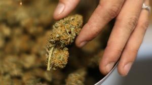 Marijuana laws done right
