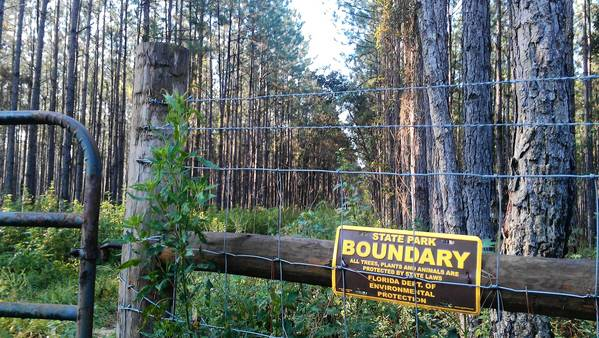 The Pine Plantation tract near the Wekiva River is on the state's proposed list of surplus conservation lands for sale.