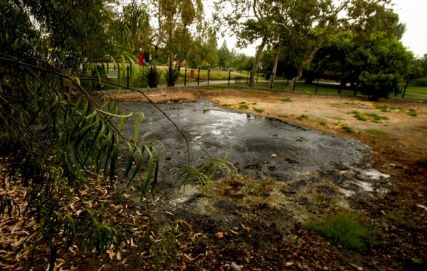 A proposed new building for the Los Angeles County Museum of Art may cause harm to the adjacent La Brea Tar Pits, pictured above.