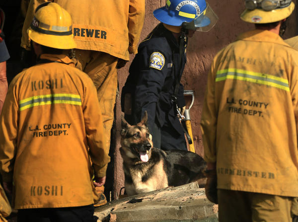 Karina Peck, a K-9 handler with the L.A. County coroner's office, center, guides Indiana Bones through the rubble left by a fire in Compton in a search for human remains.