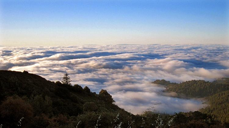 A view of a blanket of clouds from Mt. Tamalpais State Park in Northern California. A report has found that the state parks department lacks a system to track spending at individual parks. (California State Parks)