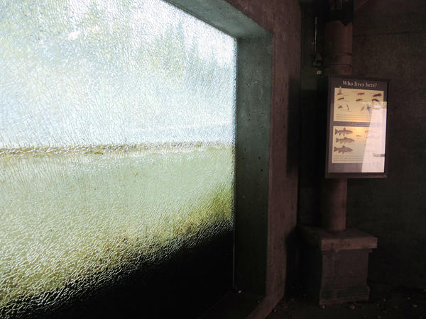 The Oden State Fish Hatchery Visitor Center's stream viewing chamber was vandalized on Aug. 18.