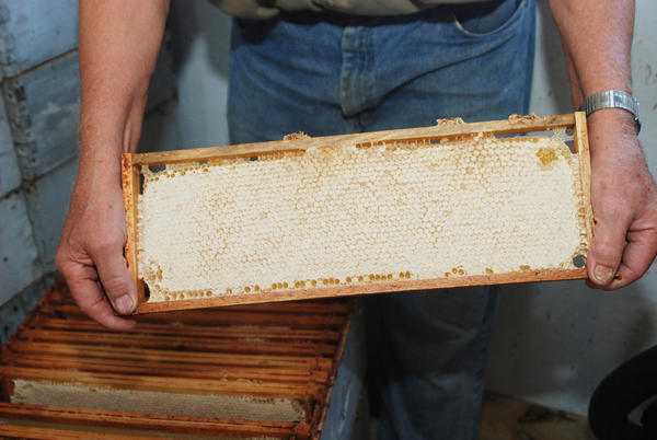 Jerry McKenney of East Jordan shows a full frame of honeycomb.