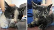 Boxcar kittens