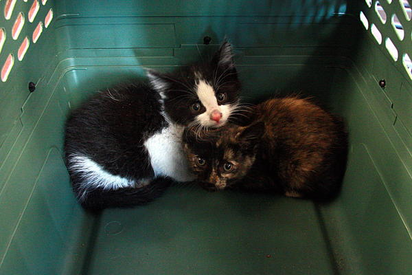Two kittens that spent five days in a boxcar traveling from Chicago to Edmonton.