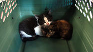 Boxcar kittens survive 5-day trip without food, water