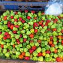 Scott bonnet pepperas at the Ocho Rios market in Jamaica