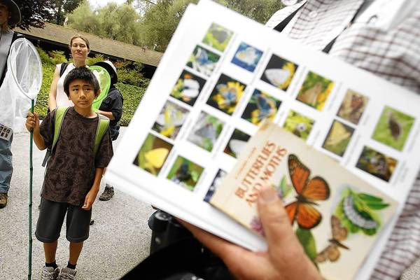 Max Ataka, 12, is ready with his net for an outing of the Lorquin Entomological Society. The group was in Rolling Hills Estates to conduct a butterfly survey in the South Bay.