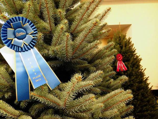 Ribbons adorn the blue spruce, foreground, and Fraser fir that took first and second prizes at the annual National Christmas Tree Assn. meeting in Arlington, Va.