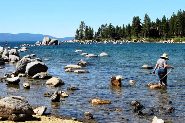 A woman cools down with her two dogs in Lake Tahoe at Zephyr Cove near Stateline, Nev.