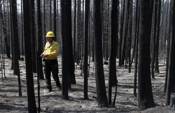 Soil scientist Todd J. Ellsworth of the U.S. Forest Service surveys the burned area of the Stanislaus National Forest near Yosemite National Park on Friday.