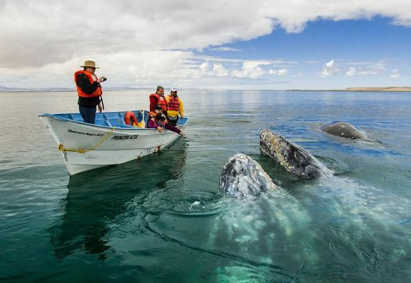 Whale-watching trips are popular in Baja during the winter months, when thousands of gray whales visit the region's lagoons.