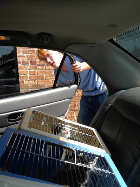 Colin McVisk, a staff member at Catnap From the Heart, loads kittens to be taken to a spay and neuter clinic.